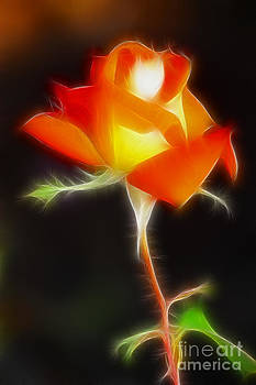 Gary Gingrich Galleries - Orange Rose 6114-Fractal