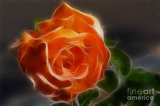 Gary Gingrich Galleries - Orange Rose 6220-Fractal