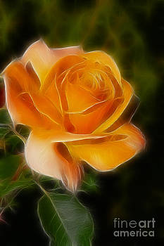 Gary Gingrich Galleries - Orange Rose 6292-Fractal
