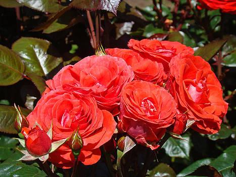 Baslee Troutman - Orange Roses Bouquet Floral Art Photography