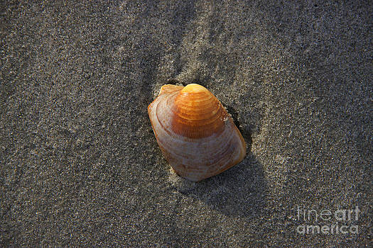 Orange Seashell by Michael Mooney
