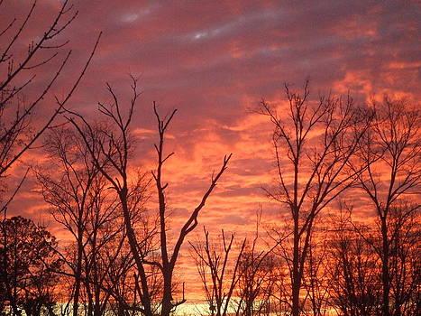 Orange Sky by Pamela Morrow