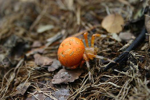 Nina Fosdick - Orange Spider 2