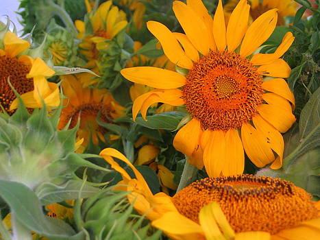 Orange Sunflowers by Kay Mathews