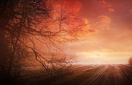 Orange Sunrise On Field by Dorothy Walker
