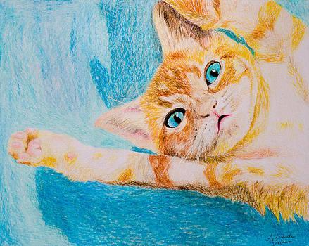 Orange Tabby by Alexandra Brown