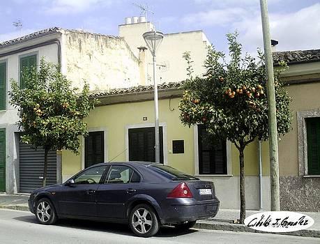 Orange Trees On A Spanish city Street by Cibeles Gonzalez
