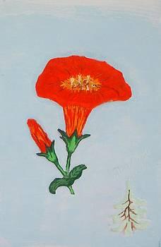 Orange Trumpet vine by Alberto H-B