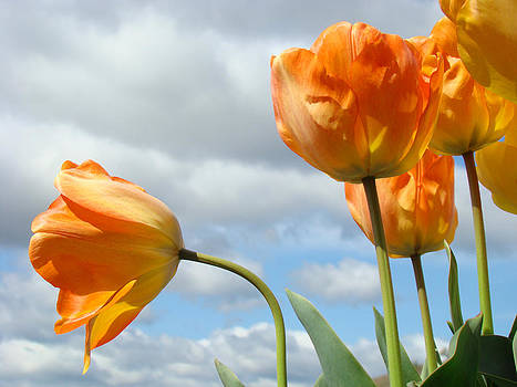 Baslee Troutman - Orange Tulip Flowers art prints Tulips Floral