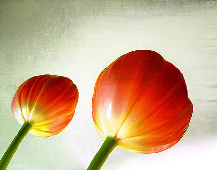 Orange Tulip Pops by Julie Magers Soulen
