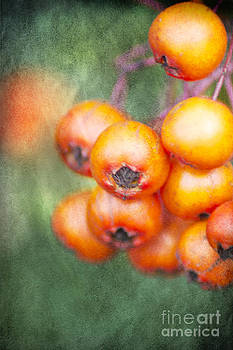 Orange Winter Berries by Michelle Orai