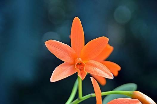 Orange Ya Glad I'm Here? by David Earl Johnson