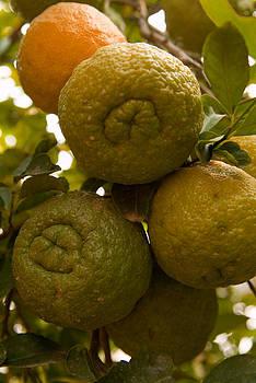 Devinder Sangha - Oranges