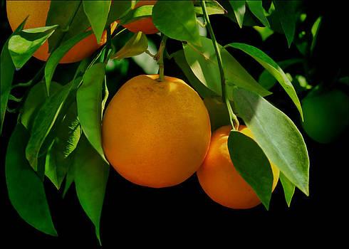 Nikolyn McDonald - Oranges