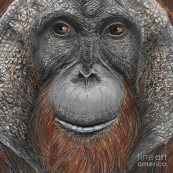 Orangutan face - Orang-Utan  - Orangutang - Orang-Utang - fine art print - stock illustration by Urft Valley Art