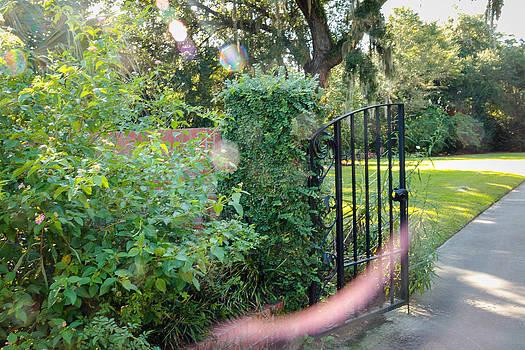 Orb Garden by Dulce Levitz