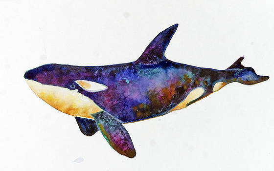 Orca Killer Whale by Michelle Scott