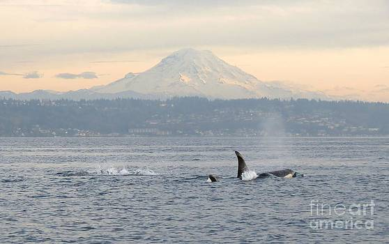 Orcas and Mt. Rainier by Gayle Swigart
