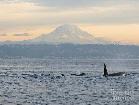 Orcas and Mt. Rainier II by Gayle Swigart