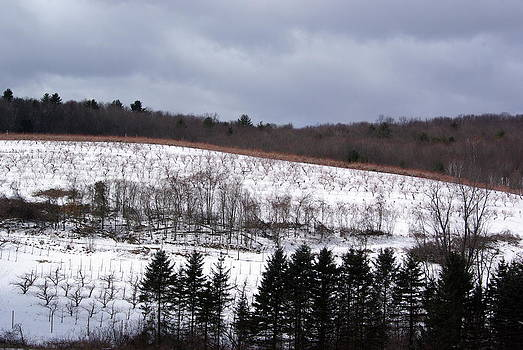 Orchard in Snow by Lindy Whiton
