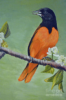Orchard Oriole by Cecilia Stevens