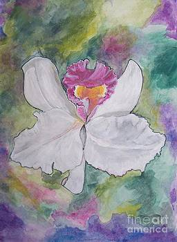 Orchid 3 by Sharon Wilkens