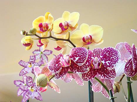 Baslee Troutman - Orchid Art Prints Orchids Flowers Floral Bouquets