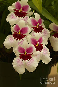 Orchid Beauty All Profits Benefit Hospice of the Calumet Area by Joanne Markiewicz