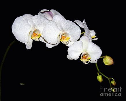 Orchid Bloom by Patrick Witz