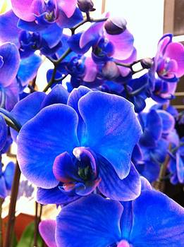 Orchid Blues by Lyn Pacific
