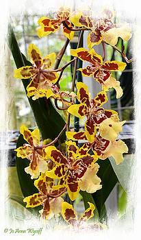 Orchid Butterflys by Jo Anna Wycoff