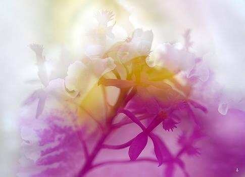 Orchid Choir-2 by Minartesia