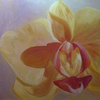 Orchid Curves by Laura Skoglund