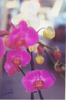 Orchid Delight by Robert Bray