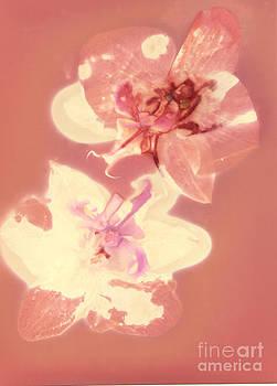 Susan Leake - Orchid flowers