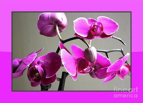 Orchid Framed by Judy Palkimas