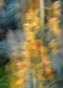Orchid Impressionism-1 by Minartesia