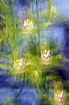 Orchid Impressionism-2 by Minartesia