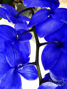 Nancy Stein - Orchid in Blue