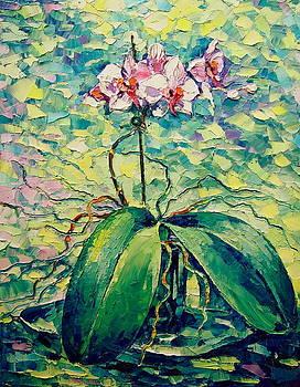 Orchid by Keren Gorzhaltsan
