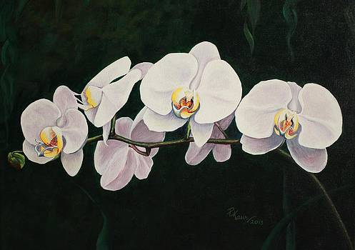 Orchid Melody by Pam Kaur
