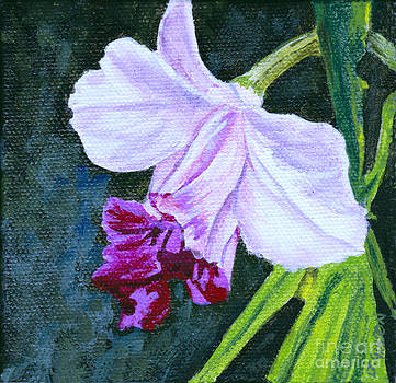 Orchid Mini by Jan Gibson