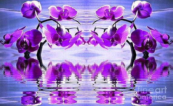 Orchid Mirrored Reflections by Judy Palkimas