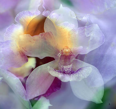 Orchid Mix by Minartesia