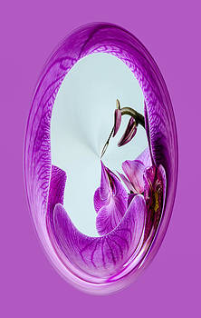 Orchid Orb by Georgette Grossman