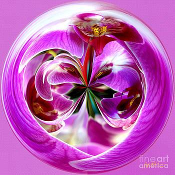 Jeff McJunkin - Orchid Orb I