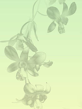 Orchid Sprig I by Arkamitra Roy
