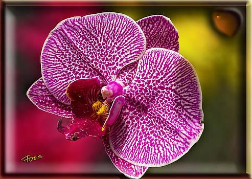 Roy Foos - Orchid Suspense