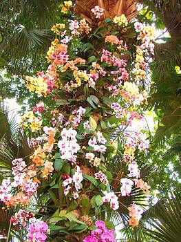 Orchid Tree by Van Ness