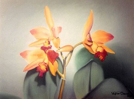 Orchid by Wagner Chaves